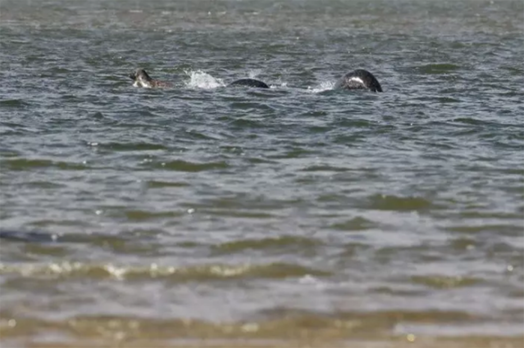 Could this be the clearest image of the Loch Ness monster ever seen?
