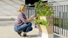 Comment Agrove participe au développement de l'agriculture urbaine