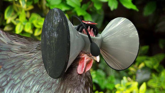 Está pasando: Un 'Oculus Rift' para... ¡gallinas!