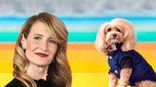 Este perro es igualito a Laura Dern... y hasta ella bromeó con el parecido en Twitter