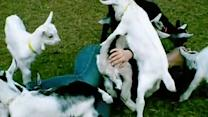 Most Adorable Goat Attack Ever!