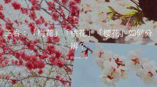 三春:「梅花」「桃花」「櫻花」如何分辨?