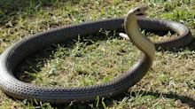 Girl, 9, bitten TWICE by deadly snake while sleeping