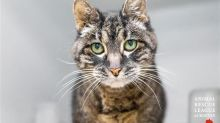 19-Year-Old Cat Left At Airport Finds New Home Just In Time For The Holidays