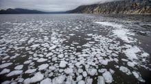 Una posible catástrofe ecológica está teniendo lugar en la región rusa de Kamchatka