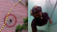 'Can't un-see it': Dolphin activist reveals scene that still haunts him