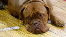Russia, cane abbandonato percorre 200 km per tornare dal padrone