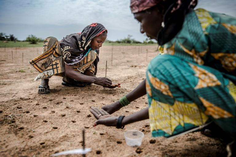 Reforestation efforts, like this one in Niger, can only be one part of the solution (AFP Photo/Luis TATO)