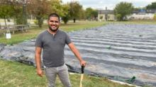 New farming project in hydro corridor aims to bring healthier food to Flemingdon Park