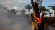Who should decide the Amazon's future?