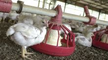 Chicken Rules The Roost, But Americans Want Their Meat Drug-Free And Easy