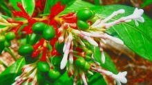 Health Benefits Of Rauwolfia serpentina