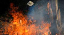 As fotos de animais carbonizados e incêndios na Amazônia são verdadeiras?