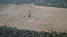 Ministério do Meio Ambiente interrompe ações contra desmatamento na Amazônia