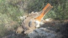 Illegal trapping and killing of songbirds at Cyprus military base at record levels