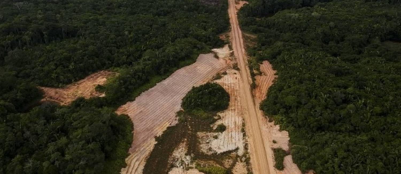 Gigantes como Nestlé e Carrefour apertam cerco a fornecedores e lançam aliança contra desmatamento