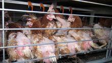 La Fondation 30 millions d'amis publie le premier Code juridique de l'animal