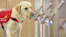 Avec Covidog, trois chercheurs alsaciens veulent former des chiens pour dépister les malades du coronavirus