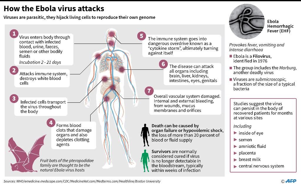 Factfile on Ebola (AFP Photo/John Saeki/Adrian Leung)