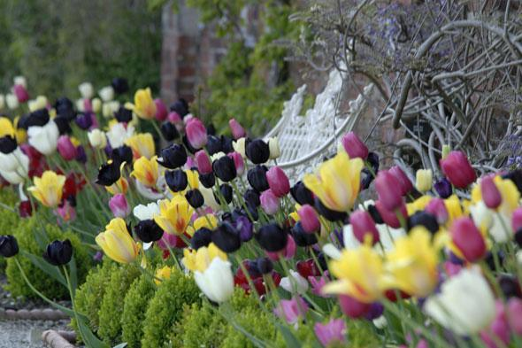 """<p> """"The popular spring bulbs are valued for their brilliant flower colours and shapes,"""" says Matthew.</p> <p class=""""p1""""> <strong>Top tulip spot:</strong> Hidcote, Near Chipping Campden.Every year 15,000 tulips burst into bloom providing a beautiful splash colour against the mellow cotswold stone of this magnificent formal house and gardens.</p> <p class=""""p1""""> <strong>Other great tulip spots include:</strong>Sizergh Castle, Cumbria;Dyrham Park, South Gloucestershire;Upton House and Gardens, Warwickshire.</p> <p class=""""p1""""> </p>"""