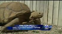 Family talks about runaway tortoise