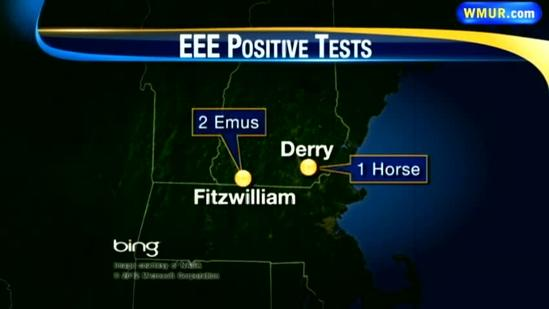 Horse, 2 emus test positive for EEE in NH