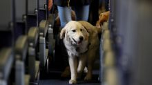 Delta bans emotional support animals on long flights