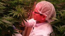 P.E.I. marijuana grower looks ahead to $20M expansion