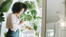 Watering hack stops your house plants from dying