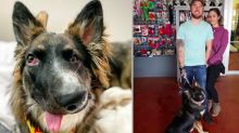 Wonky-faced rescue dog who was attacked as a puppy finally finds loving home