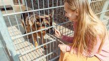 Tierheime: Immer mehr Menschen wollen Haustiere ausleihen