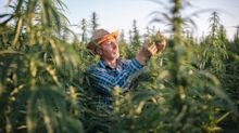 3 Cannabis Growth Stocks You Don't Want to Miss in August