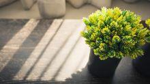 12 trucos para cuidar tus plantas de interior