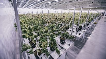 Canopy Growth signs up another province