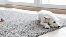 The Ultimate Guide to Cleaning Your Carpets