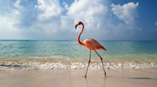Get Paid to Hang Out With Flamingos in the Bahamas