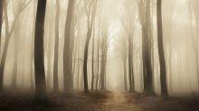 Erstaunliches Phänomen: Wenn sich die Erde im Wald bewegt