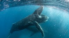 Chris Packham to present 'Blue Planet' spin-off series