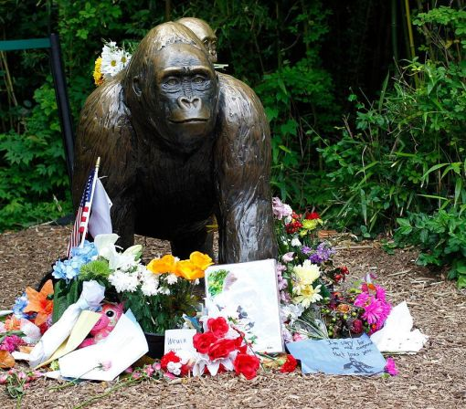 Cincinnati Zoo Is 'Not Amused' by Harambe the Gorilla Memes