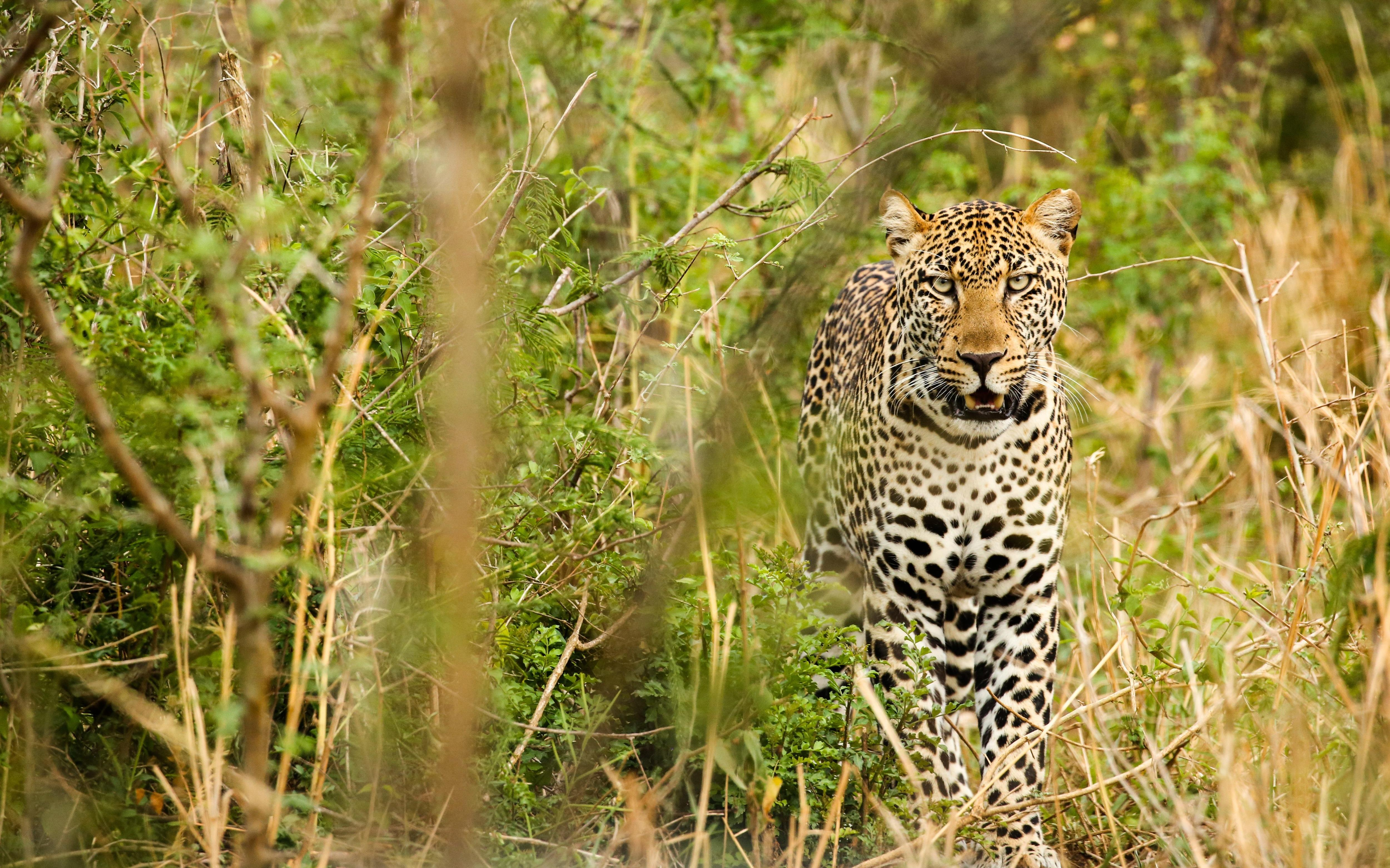 Leopard snatches and eats toddler in Ugandan national park