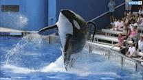 SeaWorld To Build Bigger Enclosures For Killer Whales