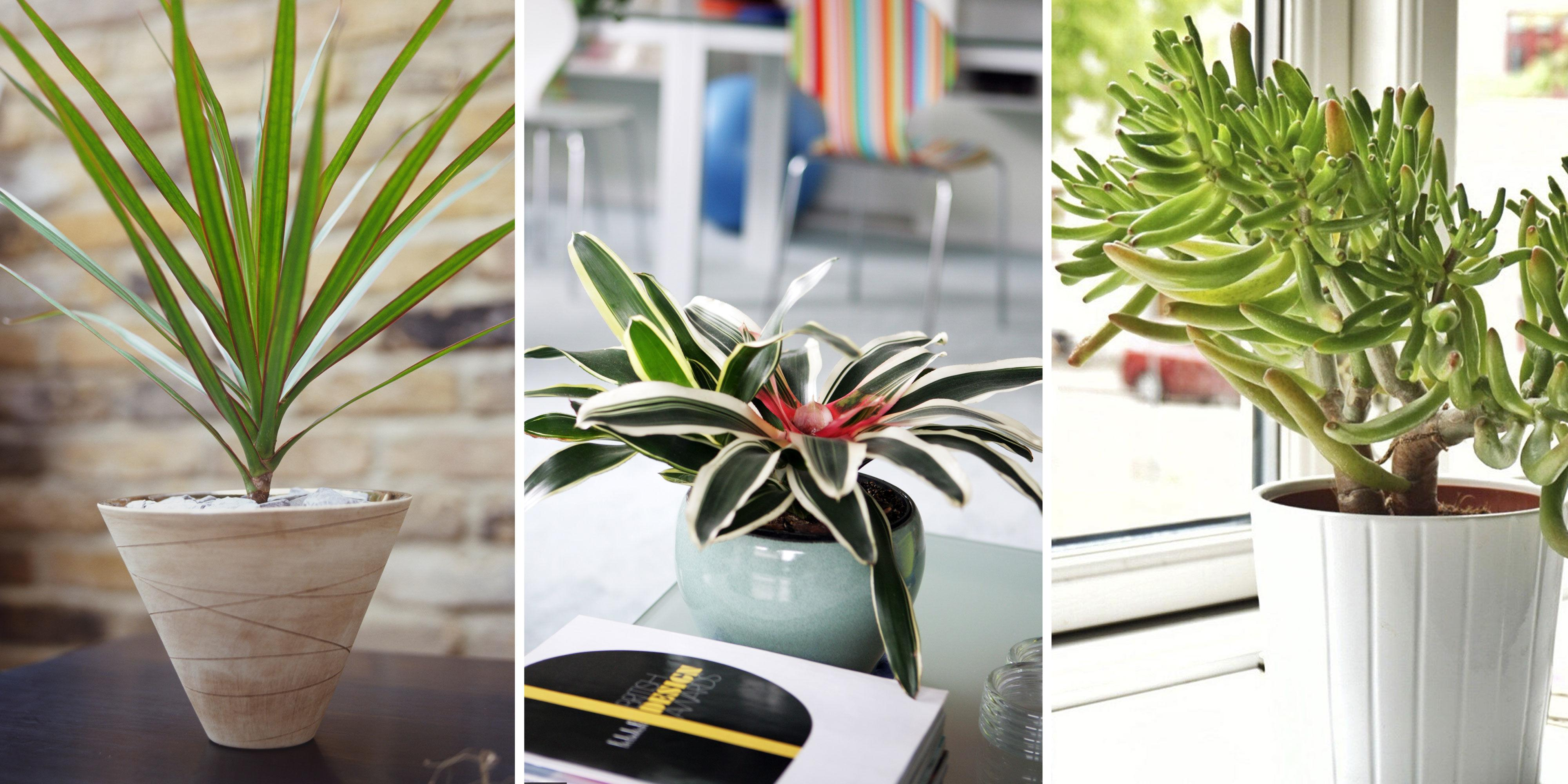 5 plants that can help improve air quality in your home - Plants can improve ambience home ...