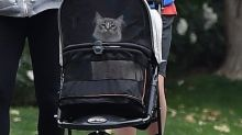 Please Enjoy These Photos of Jennifer Garner Pushing Her Cat in a Stroller