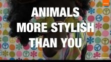 These Animals Have More Style Than You