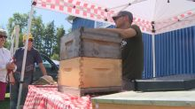 'Getting back to their roots': fair offers backyard farming advice