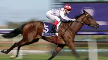 Spring aims for unbeaten filly Chaillot