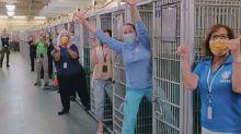 Coronavírus: abrigo fica sem animais disponíveis para adoção pela primeira vez