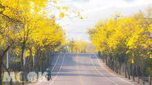 春神來了花知道!全台七大花系美照跟著網友拍