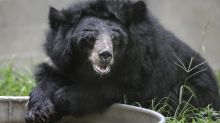 How bad will the next bear market be?