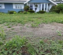How to Get Rid of Lawn Weeds